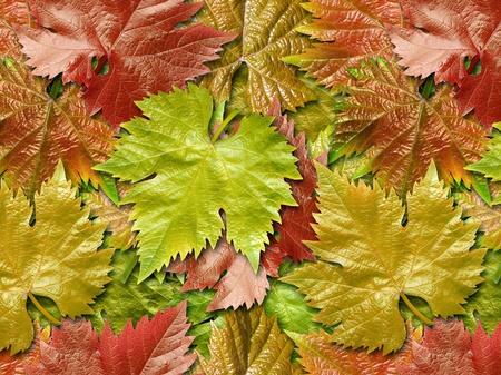 leafage: Vine leafage closeup background.