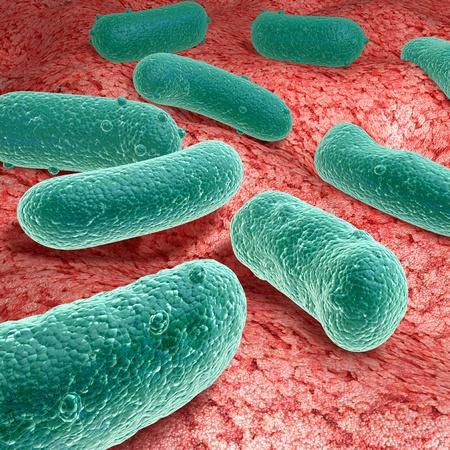 bacterias: Virus.