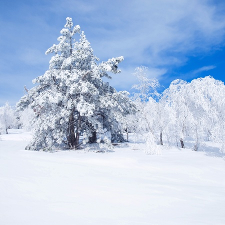 wintry landscape: Wintry landscape with snowy trees. Stock Photo