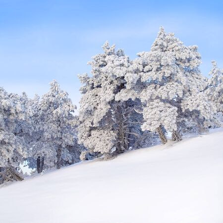 Wintry landscape with snowy trees. photo