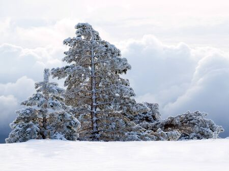 wintry: Wintry landscape with snowy trees. Stock Photo