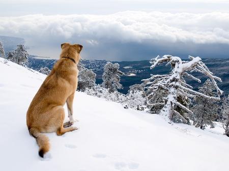 dog rock: Look dog. Stock Photo