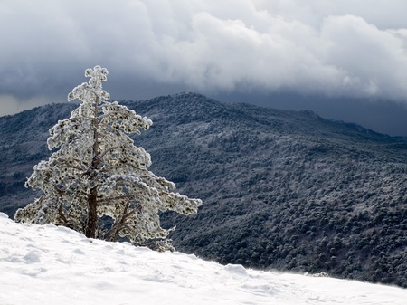 inclement: Mountain and pine-tree. Stock Photo