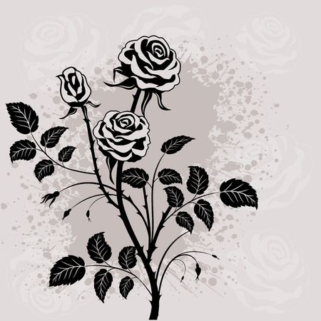 Black rose on grunge background.