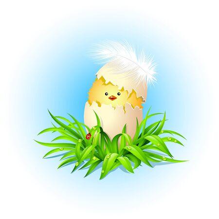 poult: Pollo divertido en la hierba verde.