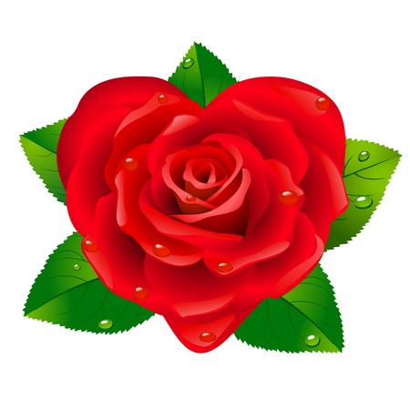 Red rose as heart on white background. Vector