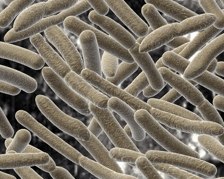 Bacillus on blurred background  photo