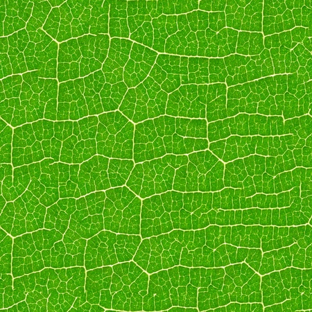 leaf vein: Green leaf seamless pattern  - texture background for continuous replicate. Stock Photo