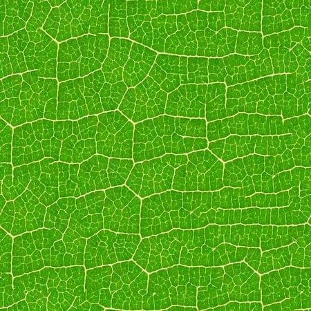 Modèle vert feuille transparente - la texture de fond pour répliquer en continu.