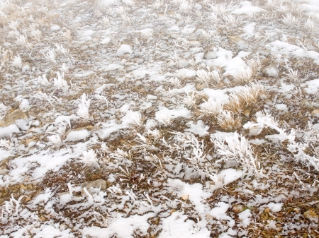 snowcovered: Snow-covered grass  Stock Photo