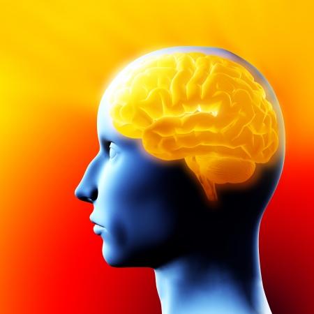 脳 - 3 D イラストレーション。