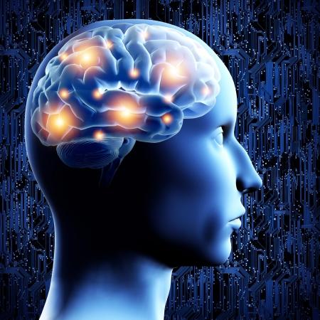 cerebro humano: Brain - Ilustraci�n 3D. Foto de archivo