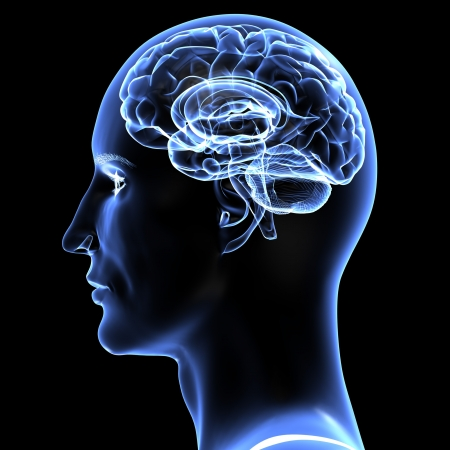 Brain - 3D illustration.  Standard-Bild