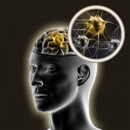 receptor: Human brain  Stock Photo