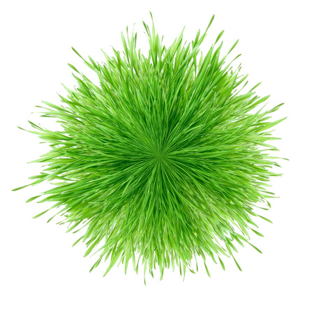 fascicle: Green grass ring cluster isolated on white background  Stock Photo