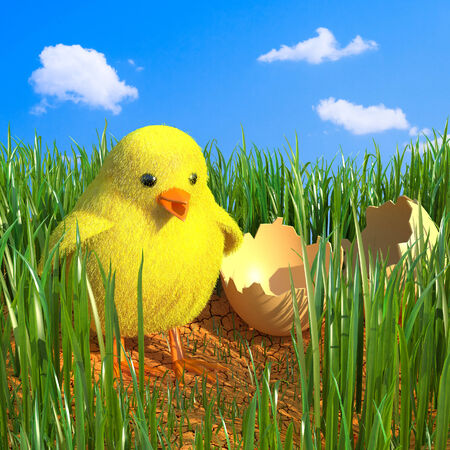 Chicken in grass  photo