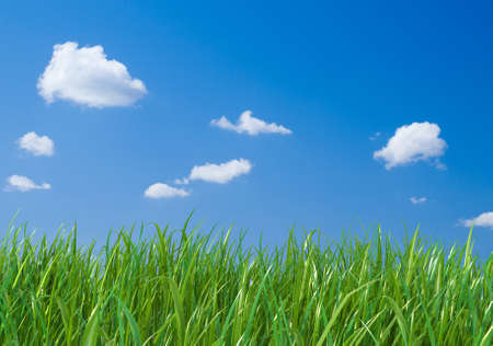 tranquillity: Green grass on blue sky background