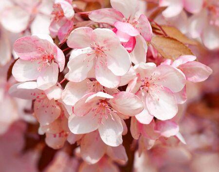 Blooming tree. Close-up shot.