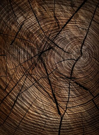 tree detail: Wood texture closeup background.