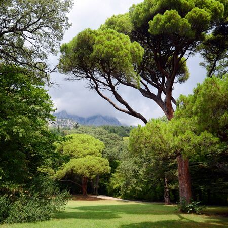 Park with green trees and a mountain in the background.