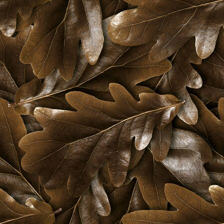 Seamless oak fall leaves background.