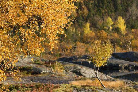 bod: Tree at fall