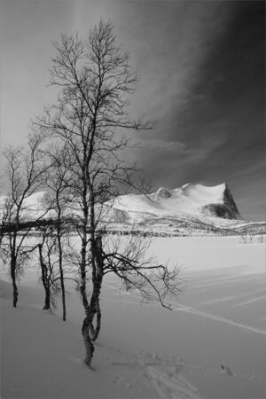 Winter landscape with trees and mountains Stock Photo - 4595530