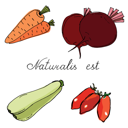 Vegetables- Carrots, beets, tomatoes and zucchini hand drawn
