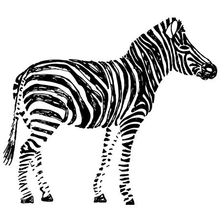 tanzania: Zebra hand drawn. Object isolated on white. Doodle art Illustration