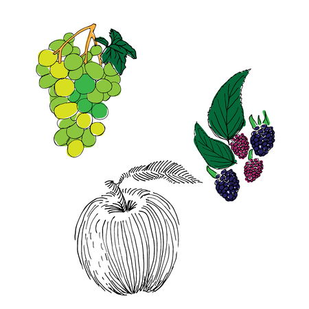 Dewberry, grapes and apple hand drawn