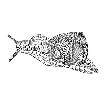 Snaile hand drawn doodle object isolated on white Ilustração