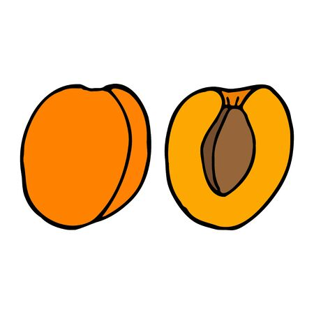 Apricot with kernel. Hand drawn outline doodle icon. Colorful isolated on white background. Vector illustration for greeting cards, posters, patches, prints for clothes, emblems. 일러스트