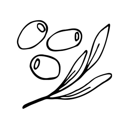Three olives and twig with leaves. Hand drawn outline doodle icon. Transparent isolated on white background. Vector illustration for greeting cards, posters, patches, prints for clothes, emblems. 일러스트