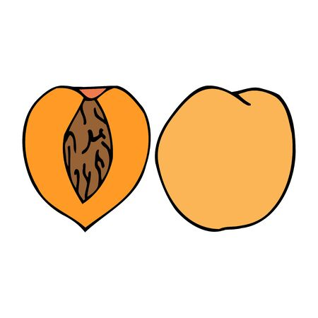 Peach with kernel. Hand drawn outline doodle icon. Colorful isolated on white background. Vector illustration for greeting cards, posters, patches, prints for clothes, emblems.