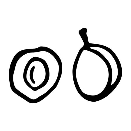 Plum with kernel. Hand drawn outline doodle icon. Transparent isolated on white background. Vector illustration for greeting cards, posters, patches, prints for clothes, emblems. Çizim