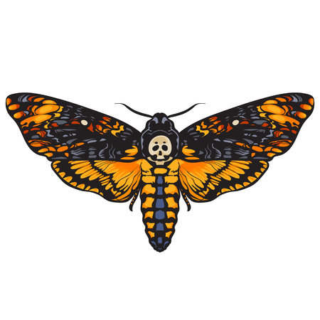 Death head hawkmoth. Halloween decoration. Hand drawn vector illustration isolated on white background. book. Vetores
