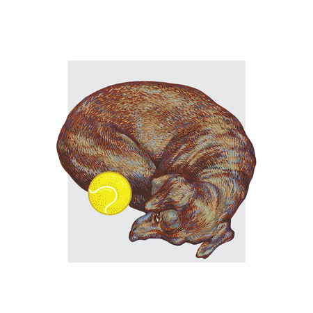 Cute little dog lying with a tennis ball. Hand drawn realistic vector illustration.