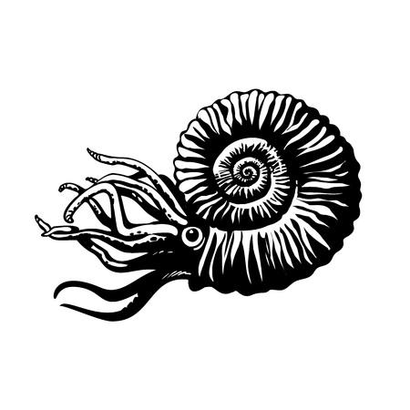 Sketch of prehistoric ammonite. Extinct marine mollusc. Hand drawn vector illustration.