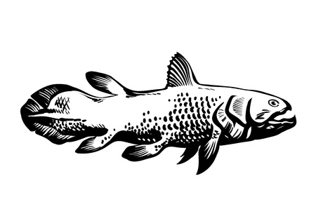 Dinichthys, prehistoric fish. Lobe-finned fish, Sarcopterygii, Coelacanth. Hand drawn vintage engraved vector illustration.