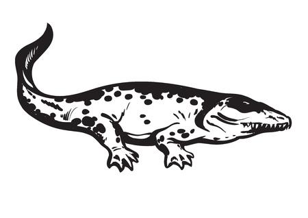 Prehistoric amphibian, Carboniferous tetrapod Stegocephalia Whatcheeriidae. Hand drawn vector illustration. Illustration