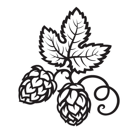 Hop cones with leaf icon. Hand drawn vector illustration. Illustration