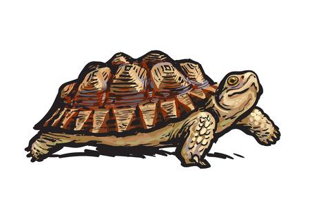 Afrikanische angespornte Tortoise.Cheerful Schildkröte zu Fuß. Realistische handgezeichnete Vektorillustration. Vektorgrafik