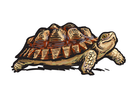 Tortuga con púas africana Caminata alegre de la tortuga. Ilustración de vector dibujado a mano realista. Ilustración de vector