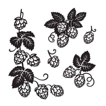 Branches of hops. Set of elements for brewery design. Hop cones with leaves icons. Hand drawn vector illustration on white background.