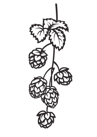 Branch of hops. Hop cones with leaf icon. Hand drawn vector illustration on white background. Иллюстрация