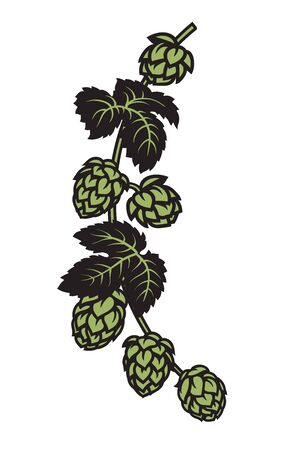 Branch of hops with leaves and cones. Design elements for brewery, beer festival, bar, pub decoration. Hand drawn vector illustration on white backgraund.