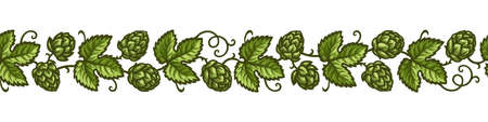 Hop branches with cones and leaves border. Brewery, beer festival, bar, design elements in vintage engraving style. Hand drawn vector illustration isolated on white background.