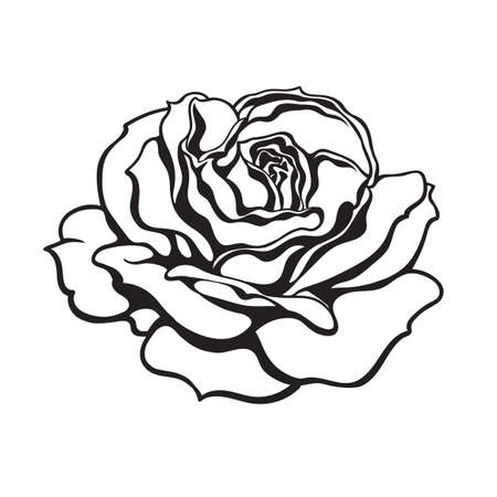 Black and white rose flower fully open. Design element for tattoo, stencil, greeting cards, flower shops. Vector illustration.
