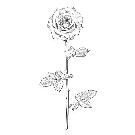 Black and white rose flower in engraving style with leaves and stem. Hand drawn vector rosebud. Decorative element for tattoo, greeting card, wedding invitation, flower shop