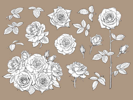 Big set of roses, open and unblown rosebuds, bouquet of flowers, leaves and stems in engraving style. Black and white detailed line art. Isolated elements for tattoo, greeting card, wedding invitation Illusztráció
